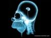 ayk73 beyni