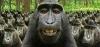 ciddi ciddi maymundan geldiğine inanmak