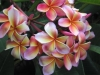 yazarların en sevdiği çiçek ve sebebi