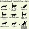 kedilerde kuyruk hareketlerinin anlamı