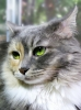 kediciklerin güzel gözleri