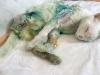 kürekle dövülen muro kedi için adalet