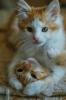 kedilerin sevilme sebepleri