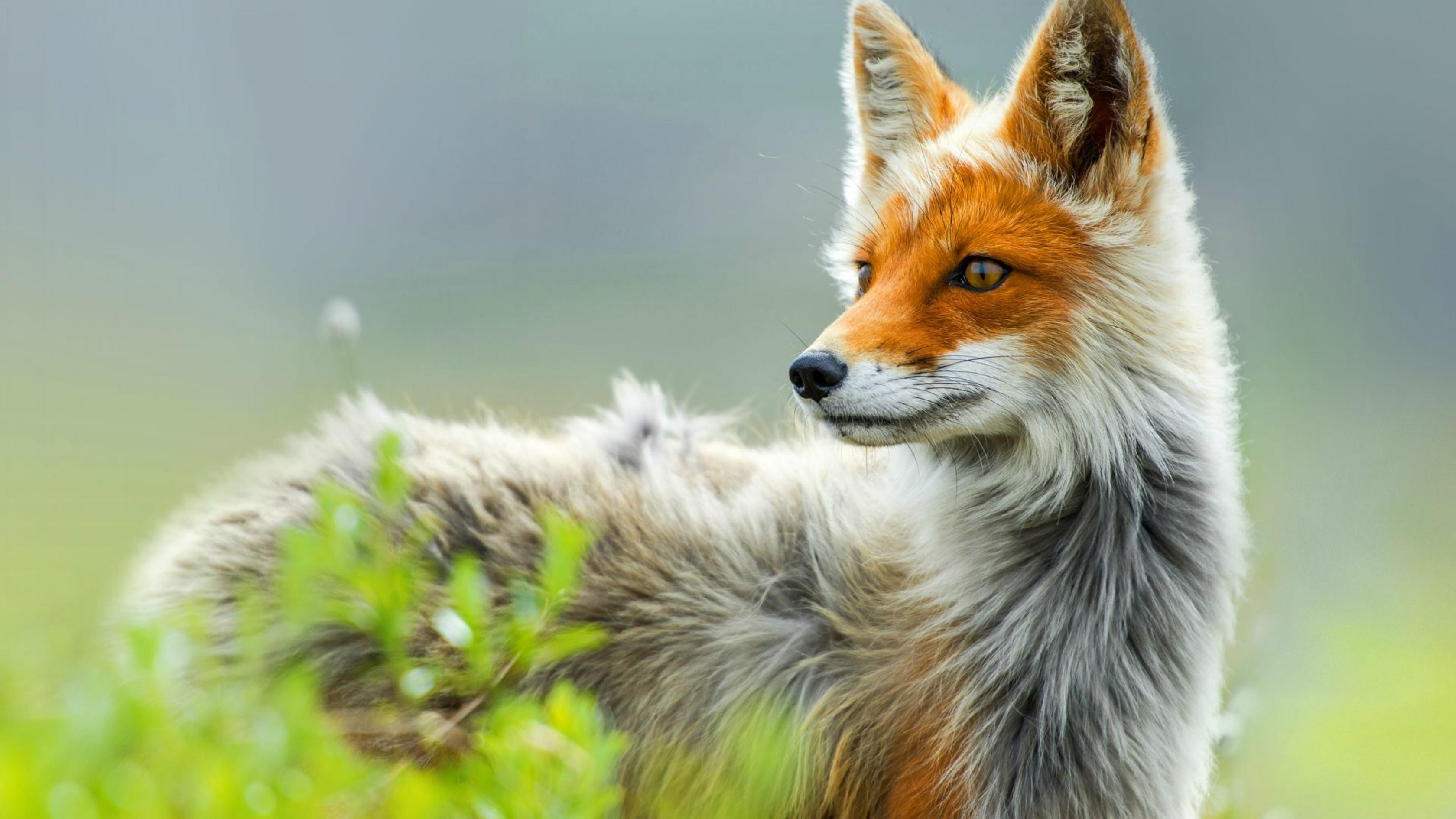 Животные фотографии красивые 4