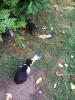 kedilerinbabasi57