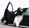 türbanlı kızların lüks araba tutkusu