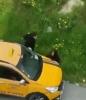 yolda yürüyen kadını taciz eden taksi sürücüsü