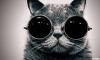 tarihi kedi fotoğrafları