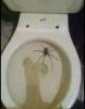 örümcekten korkan kız