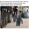 tuğgeneral ünvanı verilen penguen