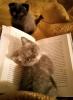 ilgi bekleyen kedi