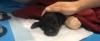 bacakları kesilen yavru köpek