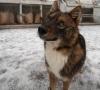 sulimov köpeği