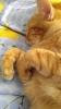 aniden gelen kedi mıncırma isteği