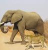 hayvanlardan alınacak dersler ve ibretler