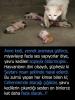 hayvan katilleri