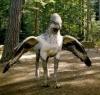 size benzeyen kanatlı hayvan