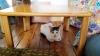masa kedi çardağıdır