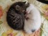 yavru kedilerin sevimli hareketleri