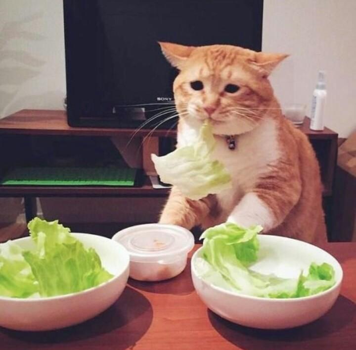 Прикольные картинки о еде с надписями