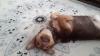 sözlük yazarlarının köpekleri