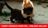 siyah kedileri dışlayıp diğerlerini sevmek