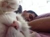günün kedisi