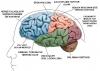 çomar beyni açıldığında görülecek olanlar