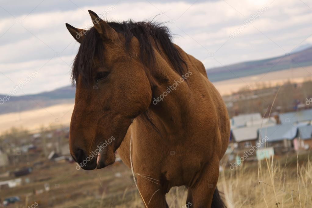 jabe atı