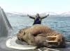 deniz ayısı