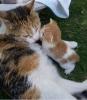 anın kedisi