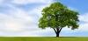 allah ın musa ya ağacın arkasından seslenmesi
