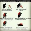 sağlık bakanlığı kitabında ayı saldırısı tavsiyesi
