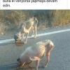 başıboş köpekler öğrenciyi hastanelik etti