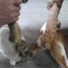 gay kedilerin sevişmesi