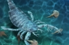 çin de keşfedilen deniz akrebinin kalıntıları