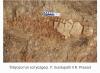 hindistan da keşfedilen ilkel deniz canlısı fosili
