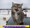 kedilerin şerefsiz olduğu gerçeği