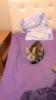 sözlük kızlarının kedileri