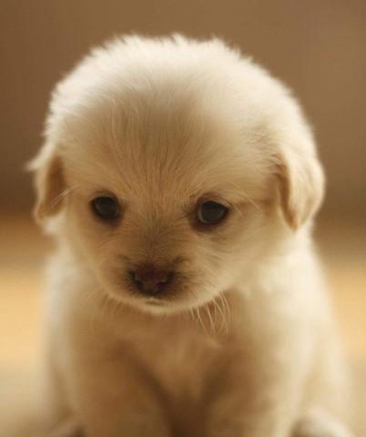 yavru köpeklerin çok tatlı olması sorunsalı