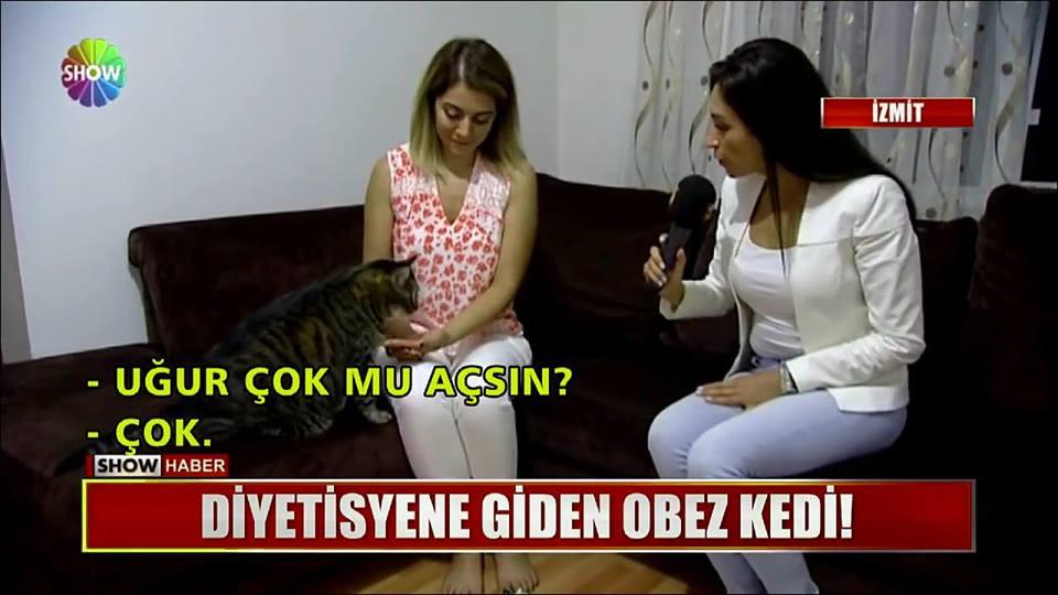 diyetisyene giden obez kedi