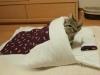 dünya kediler günü