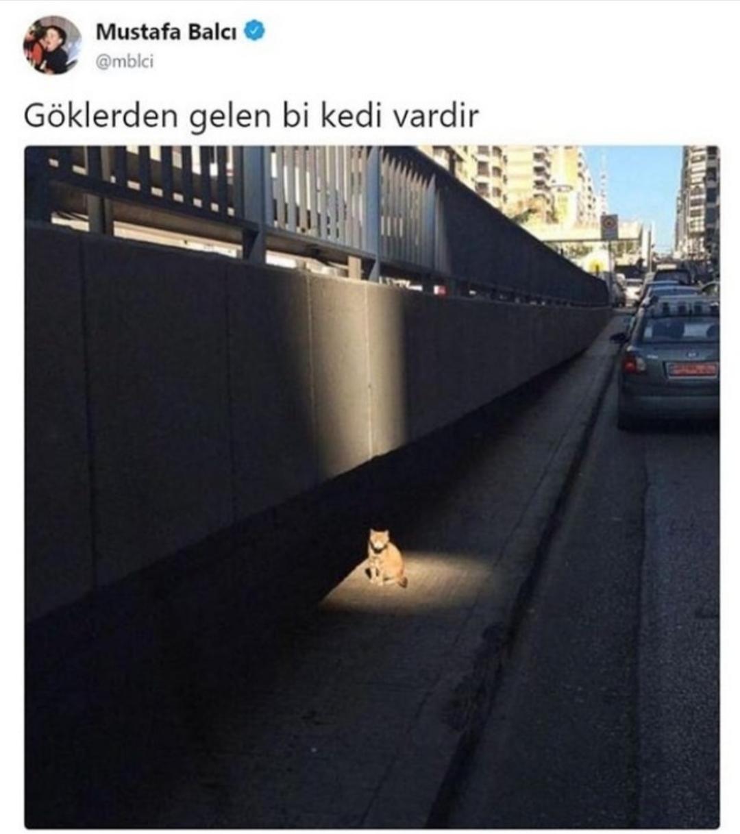kedilerin uzaylı olması