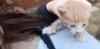 sarı kedi