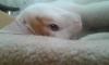 sözlük yazarlarının çektiği kedi fotoğrafları