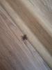 odada örümcek görmek