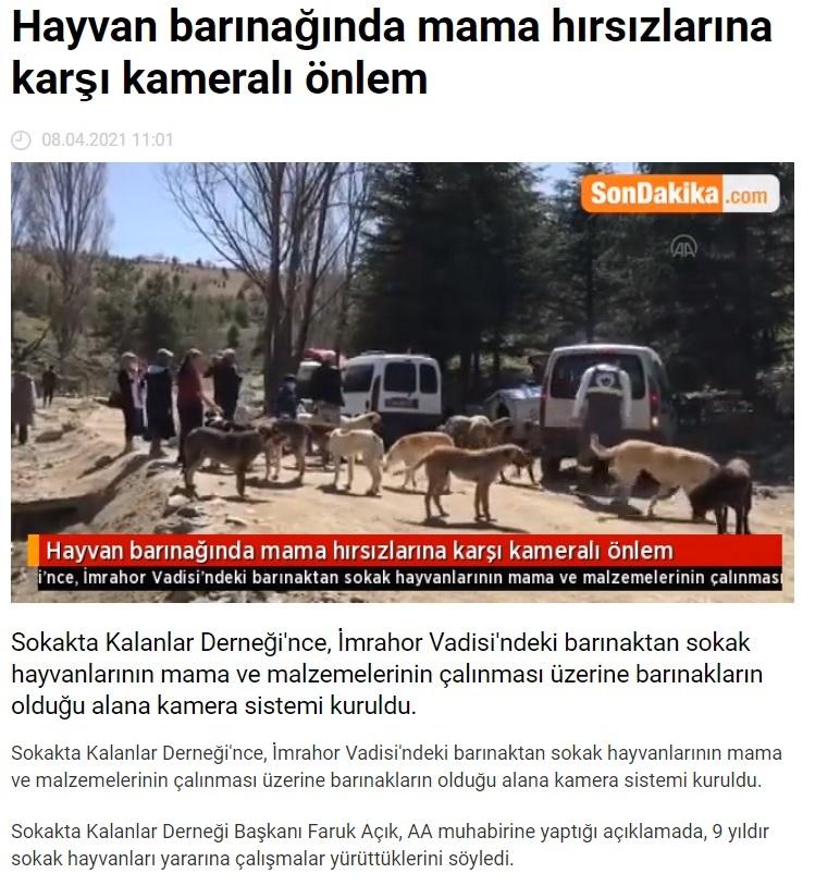 ankara da 30 köpeğin ölü bulunması