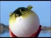 balon balığı şişirilmiş bir balondur