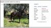 bedelli sebebiyle atını satılığa çıkaran kovboy