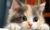 kedi fotoğrafı paylaşıp karmayı düzeltmek